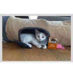 Katzen Formel DMT-KGF-1 zufriedene & glückliche Katzen