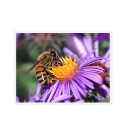 Bienen Formel - DMT-BH19 | Varroa Milben