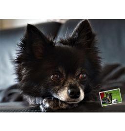 Hunde Formel  DMT-HGF-1