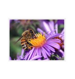 Bienen Formel - DMT-BH19